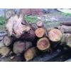 供应直径30以上的红心柏木