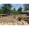 大量回收木刨花13751470939