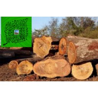 澳洲酸枝木澳洲酸枝红木家具原木招代理